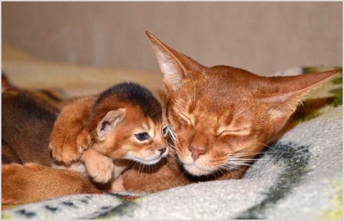 Фото кошки и котенка