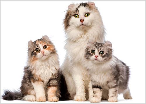 Кошка со своими котятами