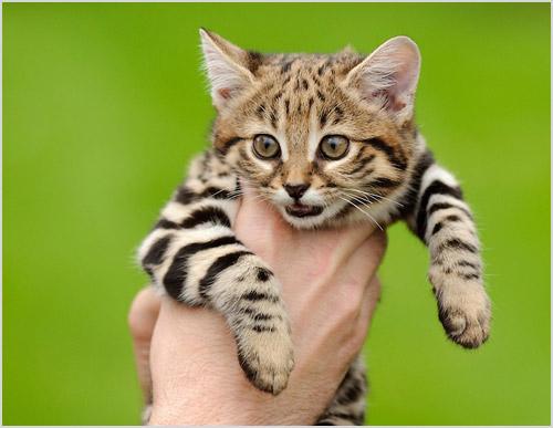 Котенок в руках у человека