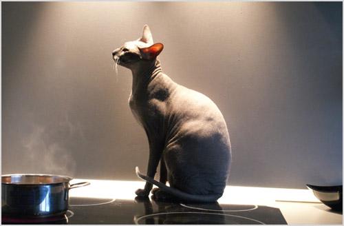 Кошка сидит на плите