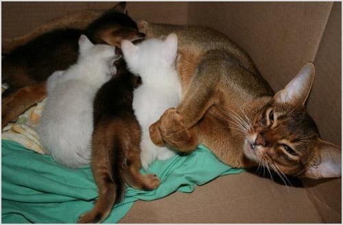 Кормящая кошка с котятами