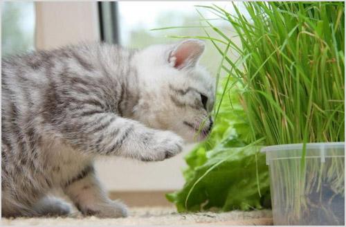 Котенок ест траву