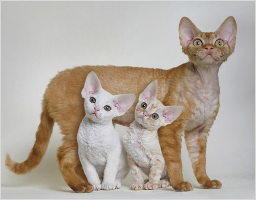 Кошка с двумя котятами