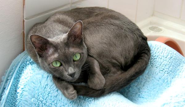 Кошка лежит на полотенце