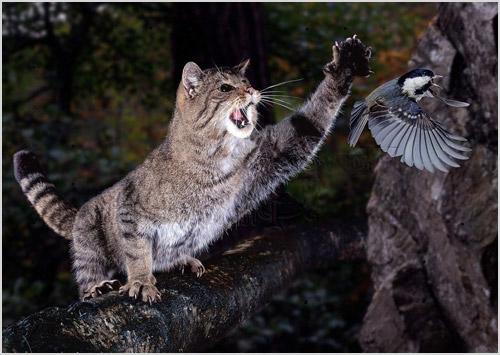 Лесной кот на охоте