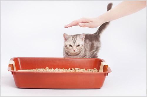 Котенка приучают к лотку