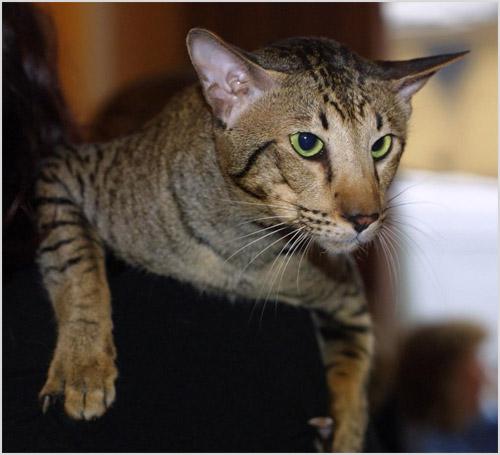Кот сидит на шкафу
