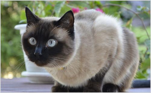 Кошка настороженно смотрит