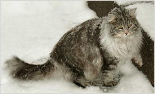 Кошка под снегом