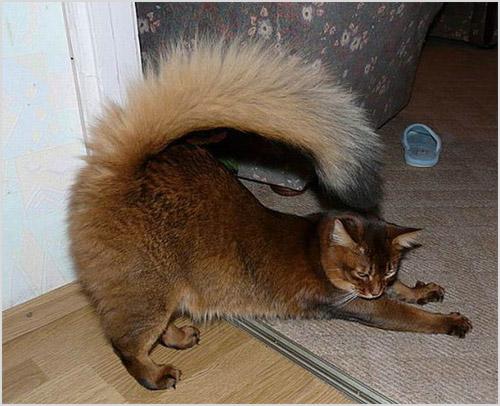 Кошка делает зарядку