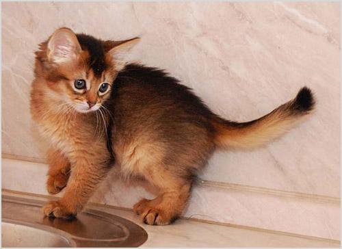 Котенок на раковине