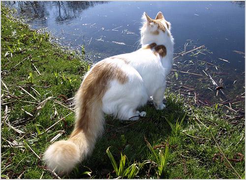 Фото кошки у водоема