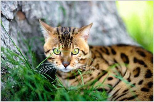 Кошка в зарослях травы