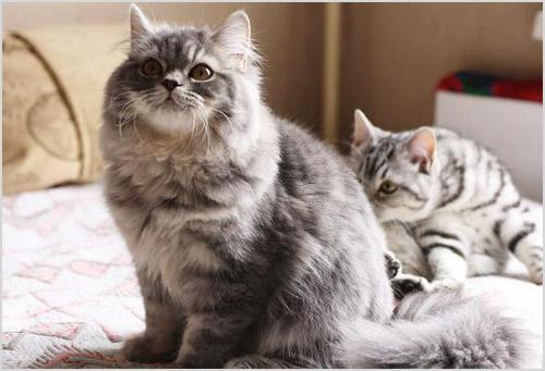 Кошки сидят на кровати