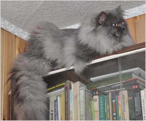 Кошка сидит на шкафу