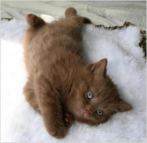 Котенок лежит на кровати