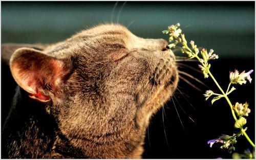 Кошка нюхает траву