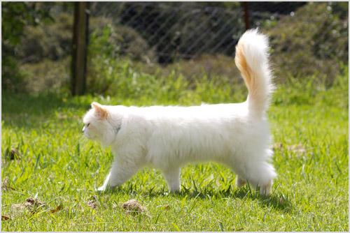 Кот Наполеон
