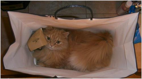 Кошка сидит в сумке