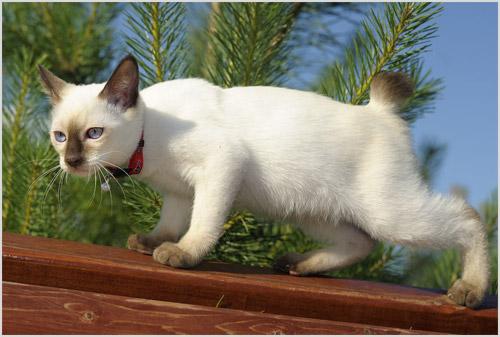 Кошка гуляет по забору