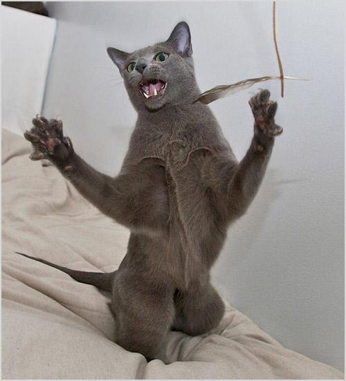 Кошка играет с перышком