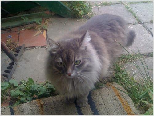 Кошка стоит на земле