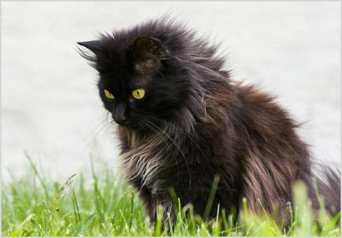 Кошка сидит на траве