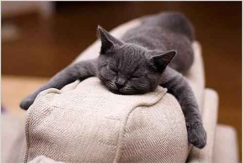 Кошка спит на спинке дивана
