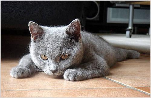 Котенок лежит на полу