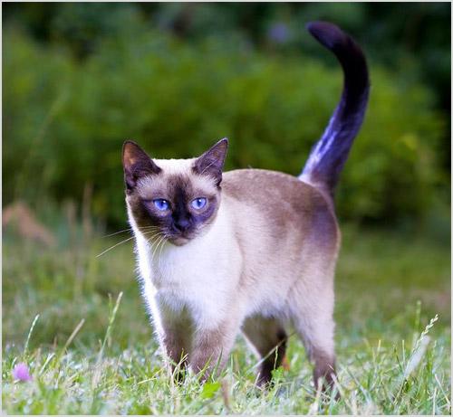 Кошка гуляет по траве