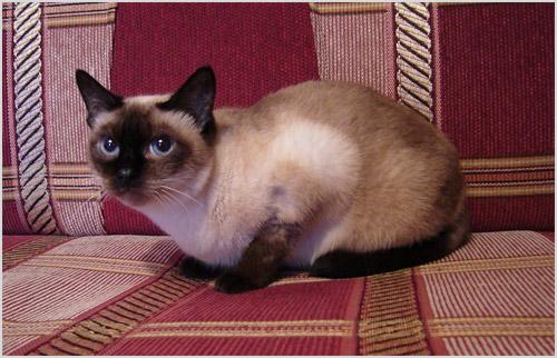 Кошка сидит на диване