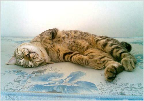 Кот лежит на матраце