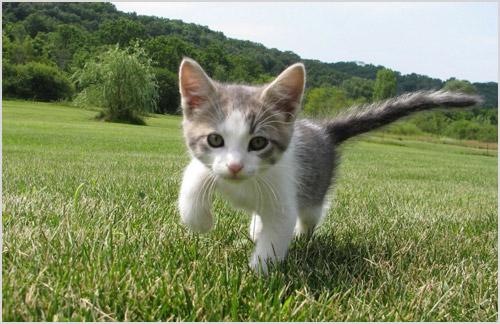 Котенок бегает по траве