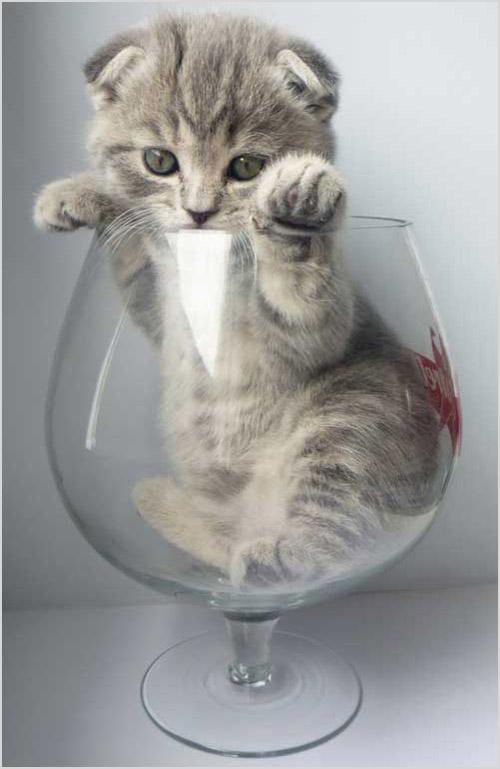 Котенок в рюмке