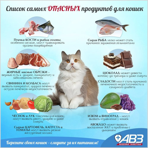 Список самых вредных для кошек продуктов