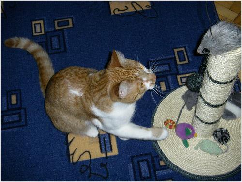 Как приучить кошку или кота к когтеточке