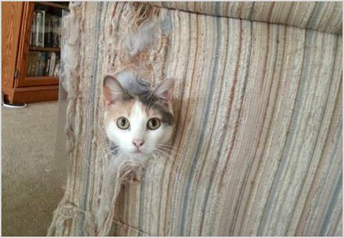 Кошка порвала кресло