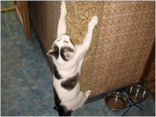 Кошка висит на стене