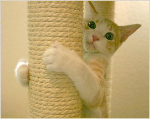 Кошка обнимает когтеточку