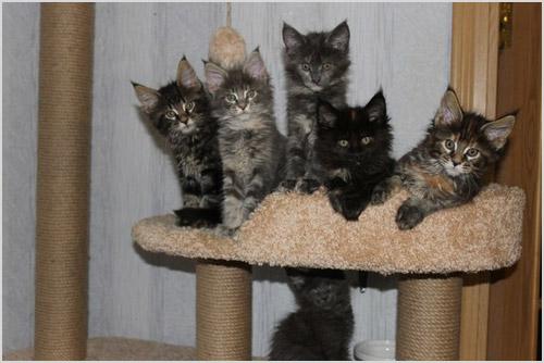 Котята сидят на игровом комплексе