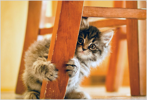 Котенок царапает мебель