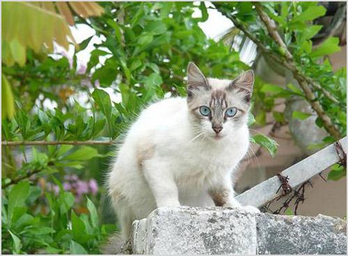 Кошка сидит на заборе