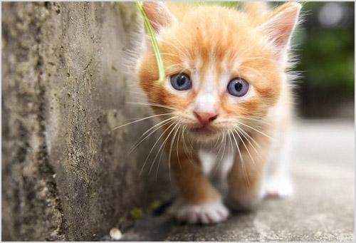 Котенок крадется вдоль стены