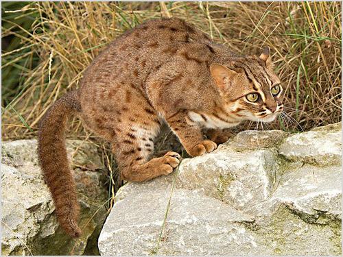 Кошка притаилась на камне