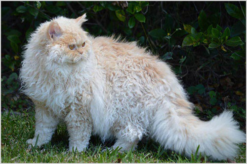 Кот гуляет по траве