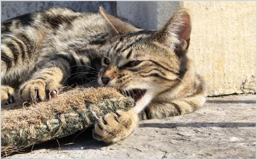 Кошка играет с когтеточкой