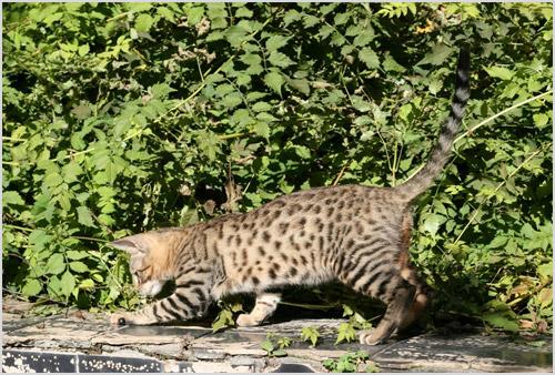 Кошка играет на улице