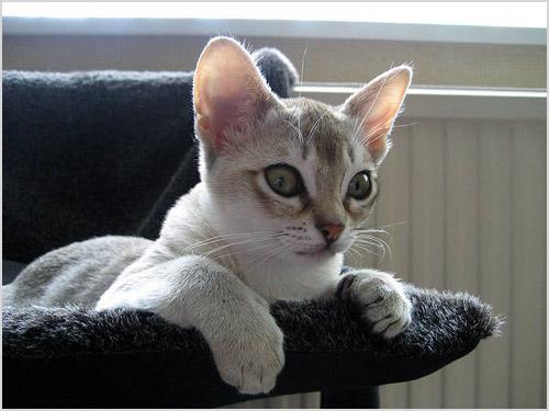Кошка сидит в кресле