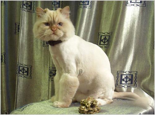 Модельная стрижка «Кот в сапогах»