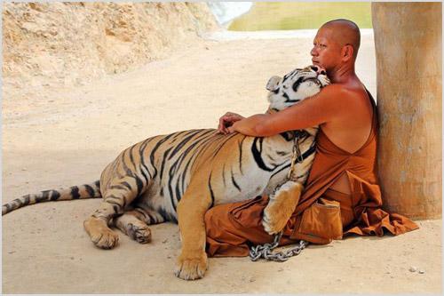 Монах сидит в обнимку с тигром